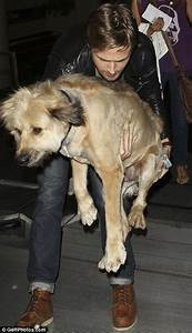 gosling carries through airport