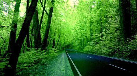 green nature wallpaper hd gallery