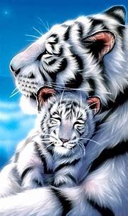 25 Best White Tiger Photographic | Rozkošné zvieratá ...