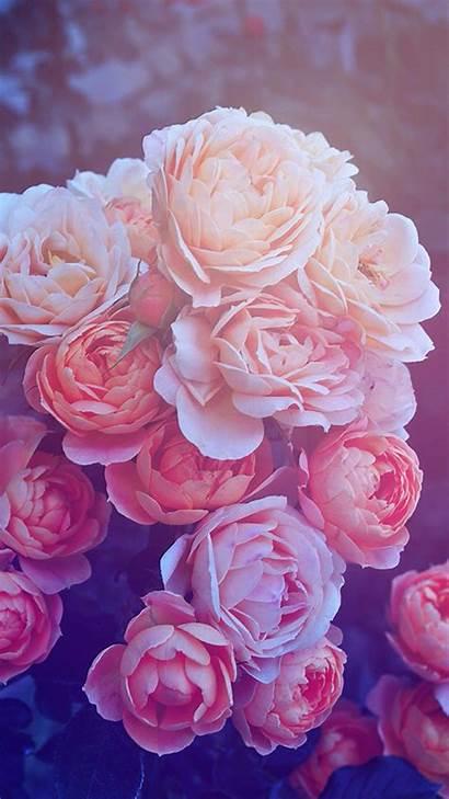 Rose Gold Wallpapers Wallpaperplay Walls Res