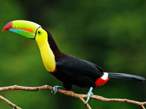 Belize Animals 6 Must See Safari Contenders