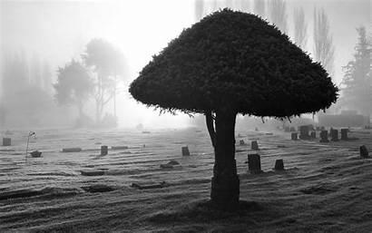 Backgrounds Background Widescreen Dark Nature Tree