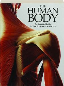 The Human Body  An Illustrated Guide To Your Body And How
