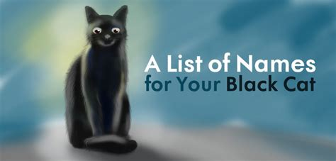 black cat names cool unique and creative black cat names for your beloved pet