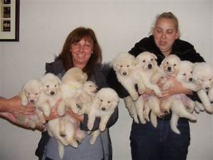 White Utonagan Puppy Puppies For Sale Pictures