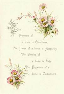 Antique Images: Free Flower Graphic: Vintage Pink Daisy ...