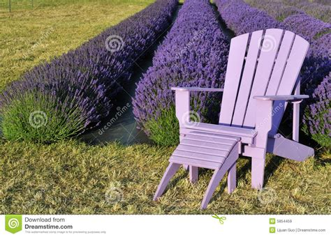 purple lawn purple lawn chair in lavender field royalty free stock images image 5854459