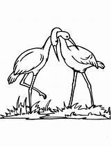 Coloring Stork Couple Realistic Para Colorear Printable Cigueñas Dibujo Supercoloring Una Pareja Seleccionar Tablero Coloringtop Categories sketch template