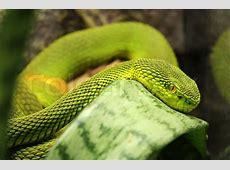 Green snake Stock Photo Colourbox