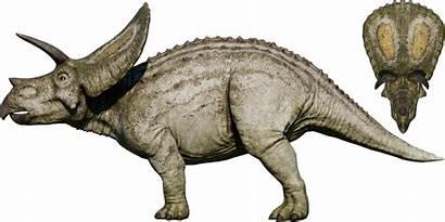 Evolution Torosaurus Jurassic Wiki Jurassicworld Fandom Wikia