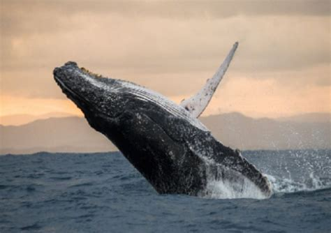 Mysterious 'Whale' holds Dogecoin worth $12 billion ...