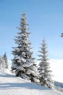 free photo winter snow tree den free image on pixabay 5701