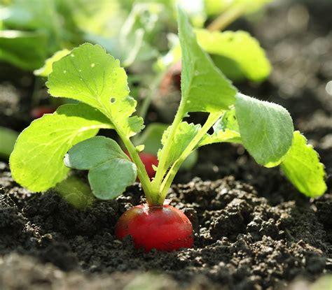 Garten Pflanzen Im Juli by Gem 252 Se S 228 En Im Juli Homestoryde Homestory Garden Home