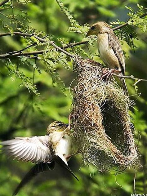 The Life of Sweet Birds: BEAUTIFUL BIRDS' NESTS