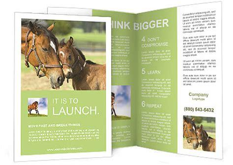 horse  foal brochure template design id