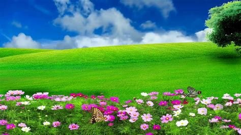 hd p nature flower scenery video royalty