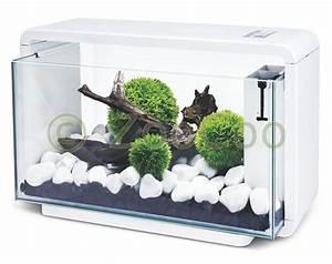 Komplett Aquarium Kaufen : hailea e25 aquariumset eco aquarium komplett set nano e 25 weiss schwarz ebay ~ Eleganceandgraceweddings.com Haus und Dekorationen