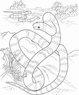 Desert Coloring Pages Boa Constrictor Oasis Getcolorings Printable Landscape sketch template