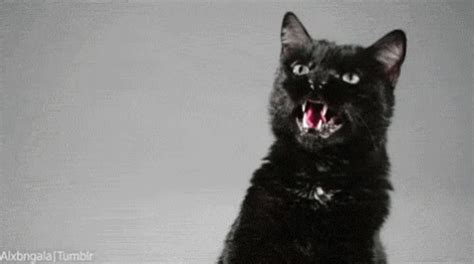 black cat evil cat gif blackcat cat evilcat discover