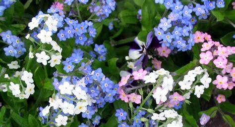 flower not flowering flowering annuals