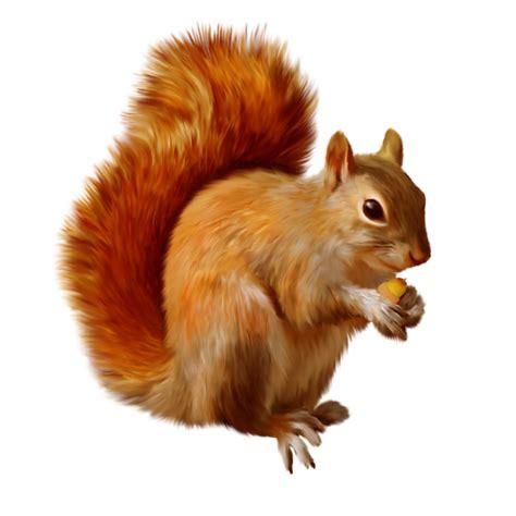 clipart png clipart png fundo transparente de esquilos imagens png