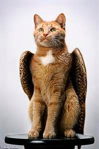 cats with wings wingedclan the sky s the limit home of the winged
