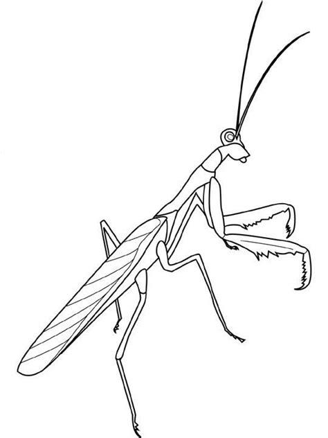 ausmalbild insekten insekten auf kids  funde auf kids