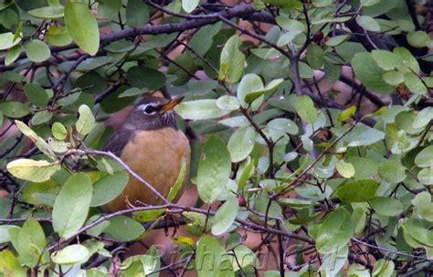 Great Baja Birding Report