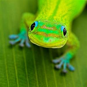 Cute Lizard Pictures | Cute animal pictures and videos blog