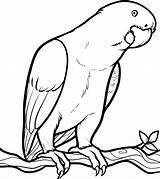Parrot Coloring Drawing Birds Printable Looking Drawings Colouring Parrots Bird Draw Clipart Sheet Pencil Animal Simple Sheets Colornimbus Fish Getdrawings sketch template