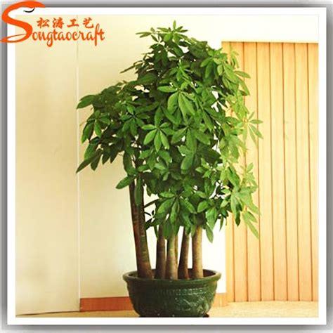 cina pemasok jenis  tanaman hias dekoratif schefflera