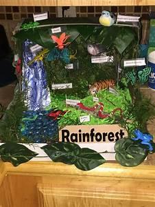 Rainforest Ecosystem For Kids | www.imgkid.com - The Image ...