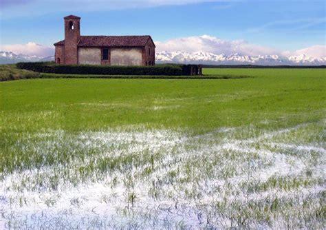 Regionale Europea Pavia by Via Alla Raccolta Riso Pavia Carnaroli