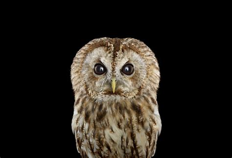 keepers  wisdom  explore  mystical beauty  owls