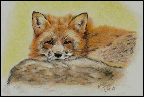 oil paintings  foxes colored pencil drawings