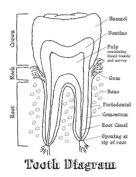 dental tooth chart diagram budor