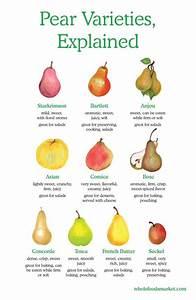 F Vs C Chart Pear Varieties Explained Starkrimson Bartlett Anjou