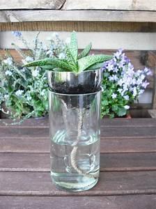 Pflanze In Flasche : geschnittene flasche mit pflanze handmade kultur ~ Whattoseeinmadrid.com Haus und Dekorationen