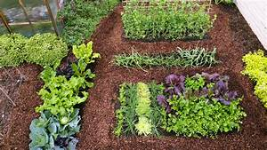Plant A Cool-season Vegetable Garden