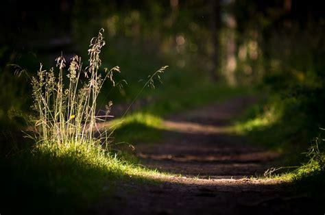 grass sunlight depth  field blurred photography