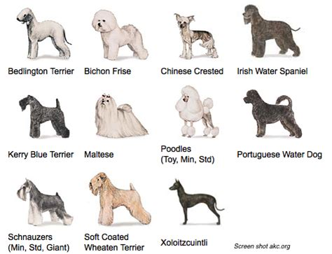 list of non hypoallergenic dogs hypoallergenic breeds