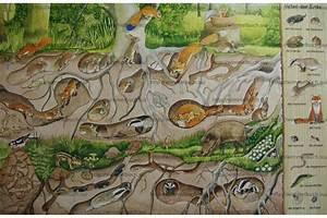 Tiere Unter Der Erde : mein erstes wimmelbuch im wald wimmelbuch ~ Frokenaadalensverden.com Haus und Dekorationen