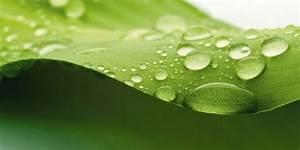 Bambus Braune Blätter : wandtattoo bl tter ~ Frokenaadalensverden.com Haus und Dekorationen
