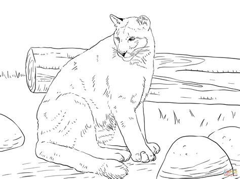 Kleurplaat Panter by Florida Panther Coloring Page Free Printable Coloring