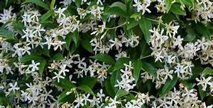 Plantes Grimpantes Mur : p pini re de l 39 aiguillon toulouse grand choix de ~ Melissatoandfro.com Idées de Décoration