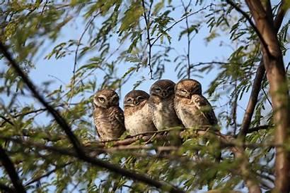 Birds Trees Animals Owl Amis Animaux Desktop