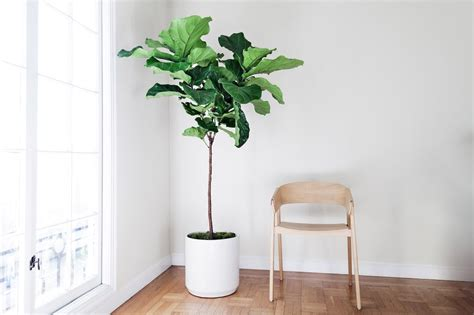 Free Plant Delivery In The San