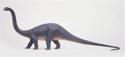 Interesting Facts About Diplodocus