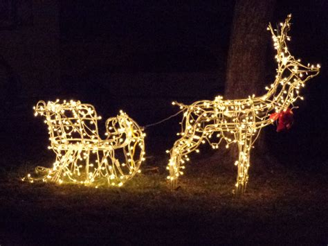 christmas reindeer pulling sleigh lighted holiday decoration picture free photograph