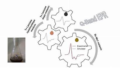 Melanin Streptomyces Molecules Tyrosinase Strain Spectroscopic Graphical
